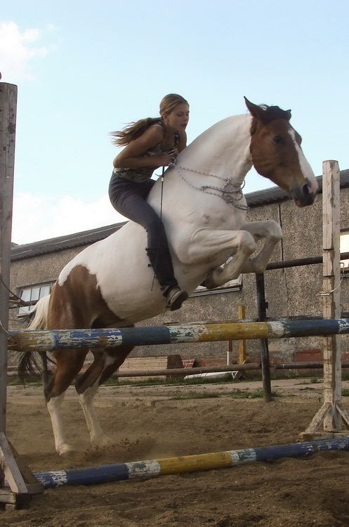 This girl is an awesome horseback rider! Bareback riding a horse on a jump with not to mention no saddle, but no bridle, too! Byelorussian Harness Horse cross mare Umnitsa Beautiful horse!