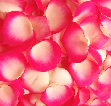 21 best bulk rose petals wholeblossoms images on pinterest bulk rose petals wholeblossoms mightylinksfo
