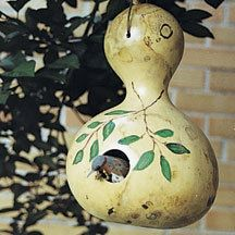 Bird House Gourds | Gourds | Vegetable Seeds | Jung Garden and Flower Seed Company