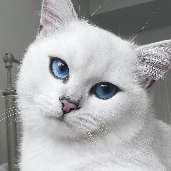 Coby The Cat Has The Most Beautiful Eyes Ever.