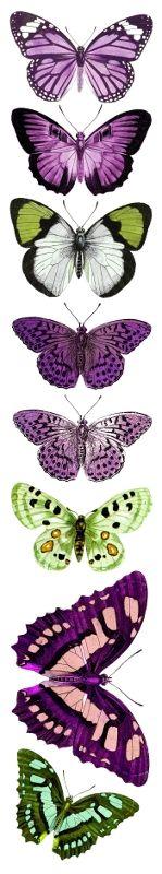Friday - motyle fioletowo-zielone :: UHK Gallery
