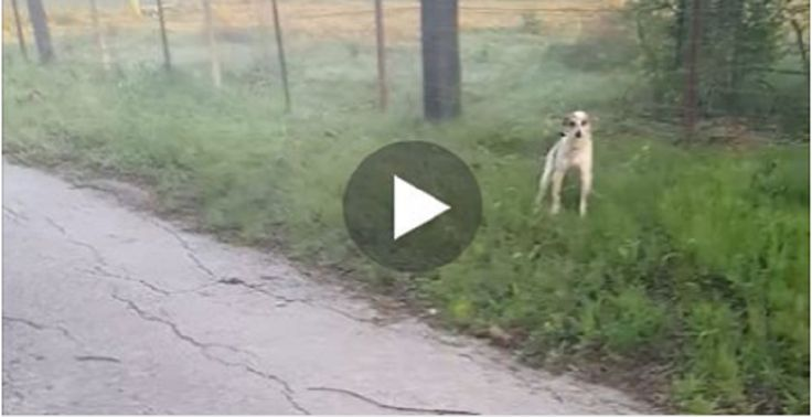 Abandoned Dog Crying on the Side of the Road just Wants to Kiss her Rescuer! OMG! | About Family Pets