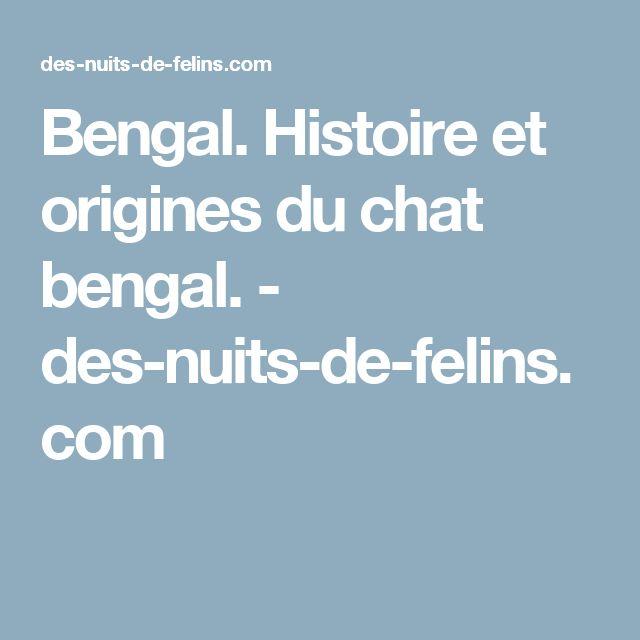 Bengal. Histoire et origines du chat bengal. - des-nuits-de-felins.com