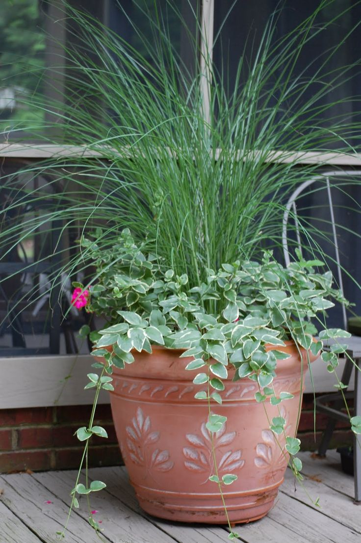 how to grow durva grass in pots
