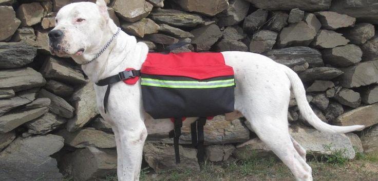 Uso de las mochilas para perros - http://www.mundoperros.es/uso-de-las-mochilas-para-perros/