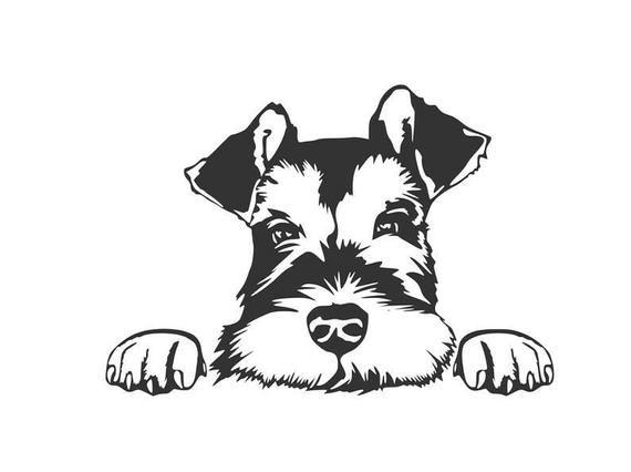 Miniature Schnauzer Peeking Vinyl Decal Free Shipping Etsy In 2021 Schnauzer Art Dog Tattoos Schnauzer Drawing