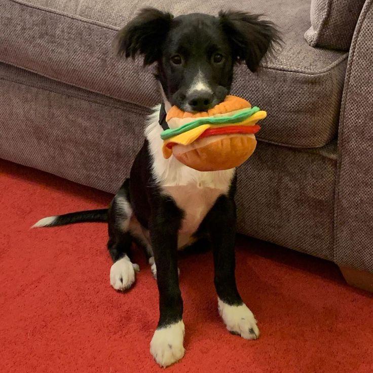Best purchase ever… 🐾🖤 . . . . . . . . . . . #puppylove #adoptdontshop #…