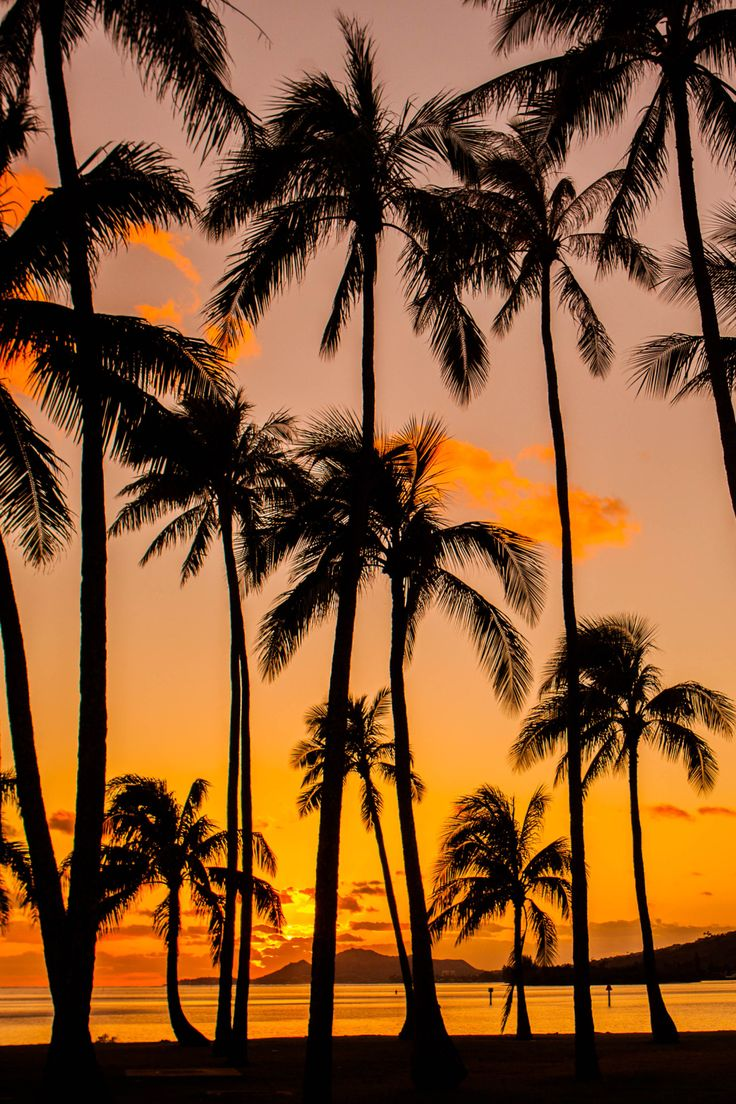 "lsleofskye: ""Palm Tree Sunset Hawaii Kai """