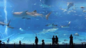 Maior parque aquático do mundo!