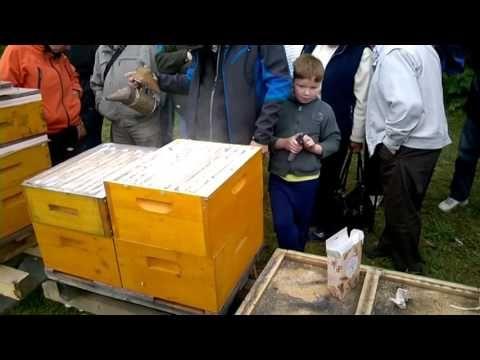 včely a včelaři    Nový Jičín - Včelí farma Říha - redukce roztočů pomocí moučkového cukru