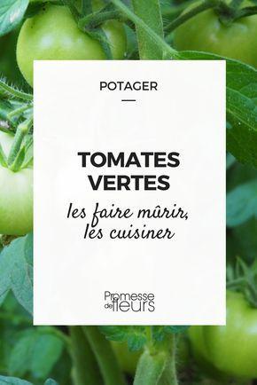 Que faire des tomates encore vertes en fin d'été ? Découvrez comment les faire mûrir et les cuisiner