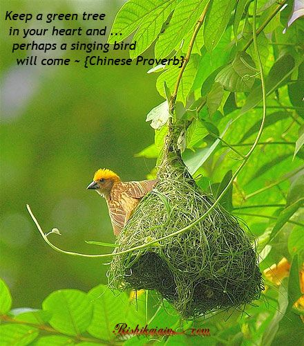 Chinese ProverbChine Proverbs, Architects, God, Birds Nests, Green, Quotes Pictures, Furries Friends, Inspiration Quotes, Feathers Friends