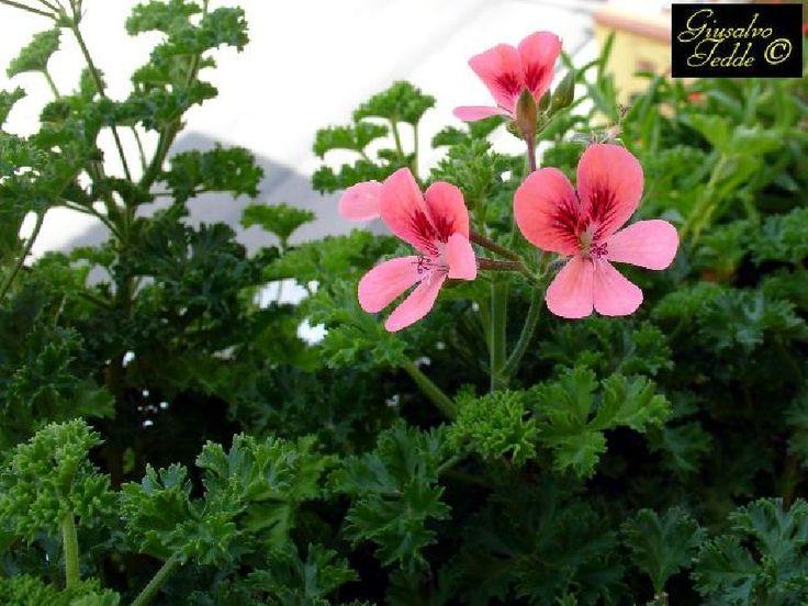 17 migliori idee su piante da appartamento su pinterest for Piante e fiori da appartamento