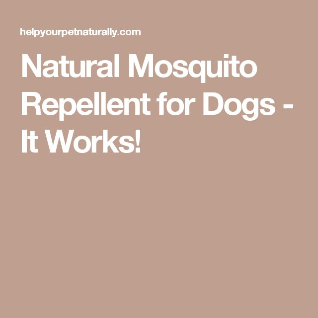 Natural Mosquito Repellent for Dogs - It Works!