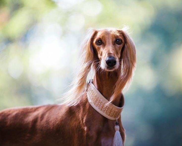 개, 동물, 애완 동물, 귀여운, 자연, 야외 활동, 아름 다운, Hdr