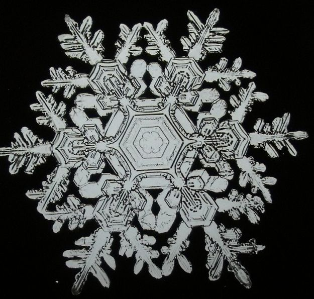 The First Pictures Of Snowflakes. Wilson Bentley