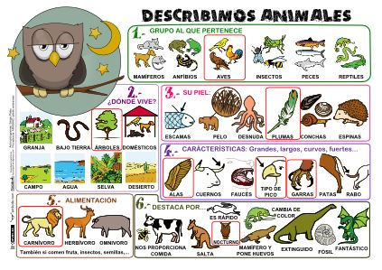 Describimos Animales Poster in color or b -- FREE to download & print!