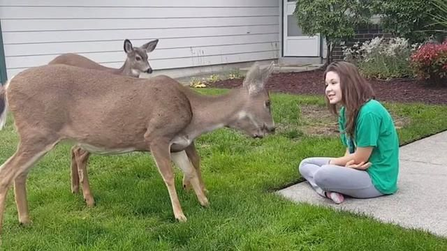How amazing! Three wild deer approach this young girl for a free snack!  Credit: JukinVideo