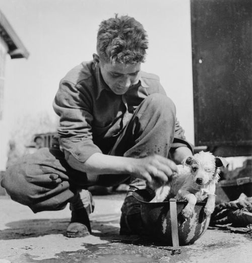 Robert Capa, American soldier bathing a puppy in his helmet, Tunisia, c.1943.