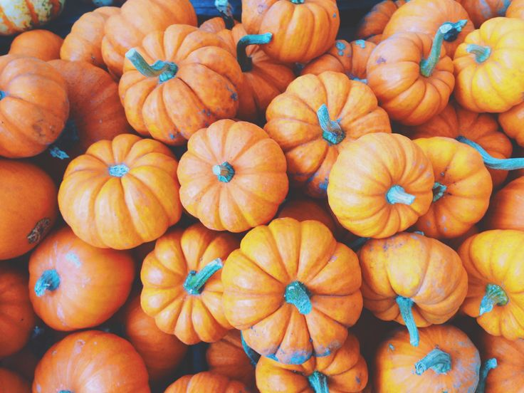 Pumpkin is extremely nutrient-dense and packed with vitamins and minerals. This close relative of zucchini and watermelon is an excellent source of vitamin A, rich in potassium and has an ORAC value of 483. When using it in your favorite Thanksgiving recipe, look for organic pumpkin with no added sugar in BPA-free cans or Tetra Paks.