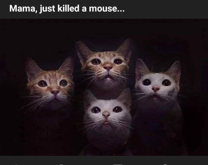 1 Twitter Best Cat Memes Funny Animal Memes Funny Cat Memes