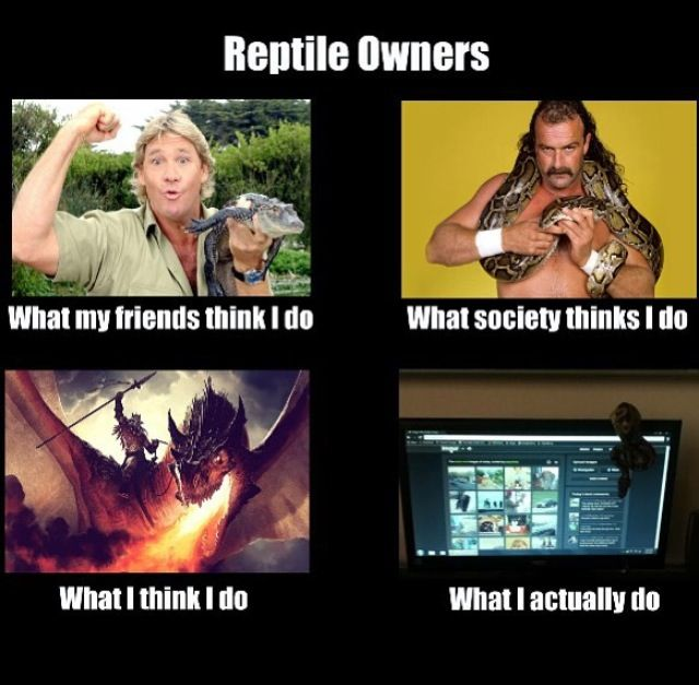 Replace the snake with a leopard gecko, and it fits:-)