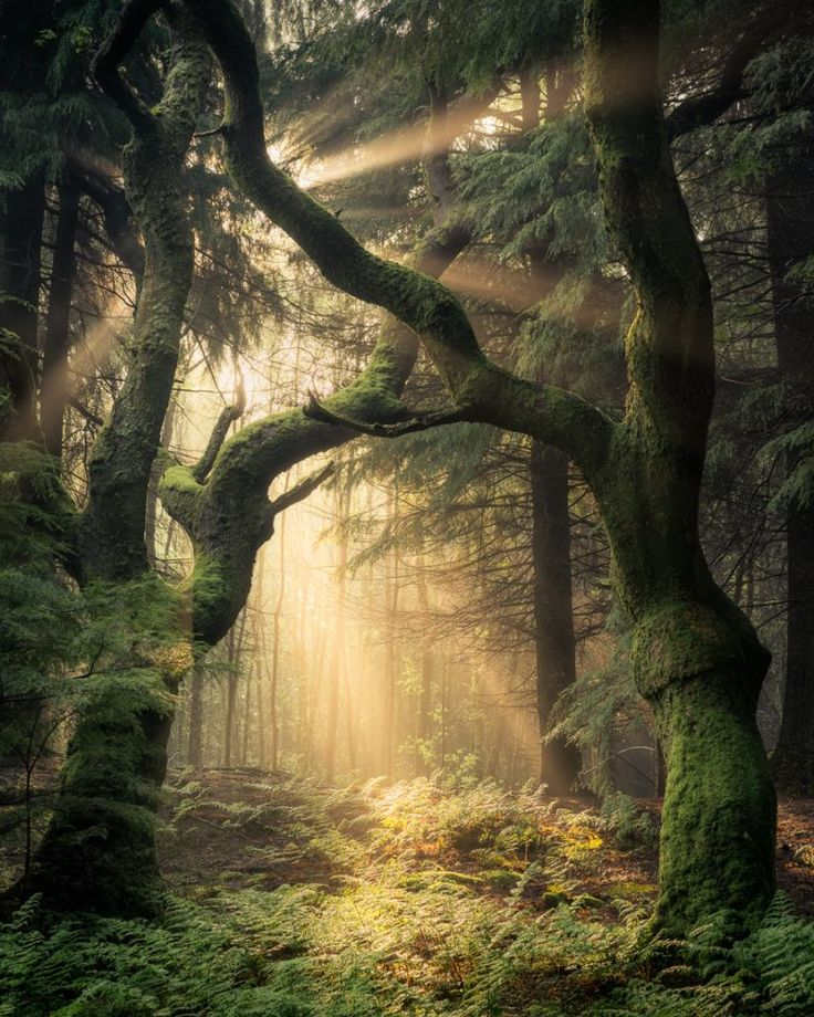Guardians of the Forest, Wales by Simon Baxter