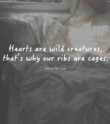 My heart is a wild animal