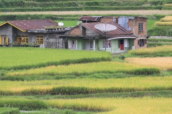 Ricefield, Indonesia