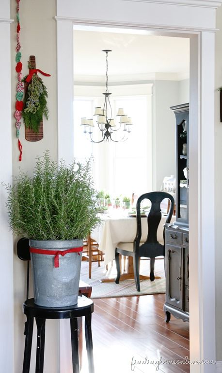 Christmas Decorating Ideas: Holiday Housewalk Tour - Finding Home Rosemary plant brought in and tied with red ribbon...