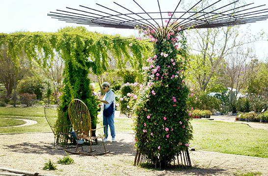 Rose trellis nell seiler love the umbrella shape looks like welded rebar the garden - Climbing rose trellis ...
