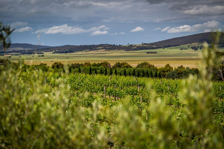 Instagrammer @jmcfeatphoto and his guests enjoyed a Lerida Estate Wines Canberra Vineyard and Winery Tour, including a lunch overlooking the amazing views of Lake George. #Humanbrochure