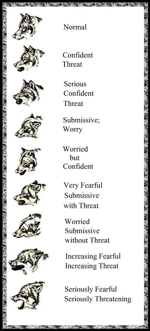 Wolf Gestures