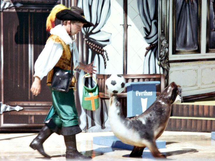 Sea Lion Musketeer Show