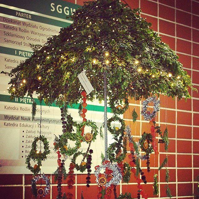 Wystawa świątecznych kompozycji studentów Podyplomowych Studiów #FlorystykaSztukaUkładaniaKwiatów #studiapodyplomowe #budynek35 #wystawa #kwiaty #kompozycja #dekoracja #święta #bożenarodzenie #WOBiAK #SGGW 🌠❄🎄 #Student's work #exhibition at the lobby in #building35 #fowers  #floristry #decoration #holiday #xmas #ideas #WULS
