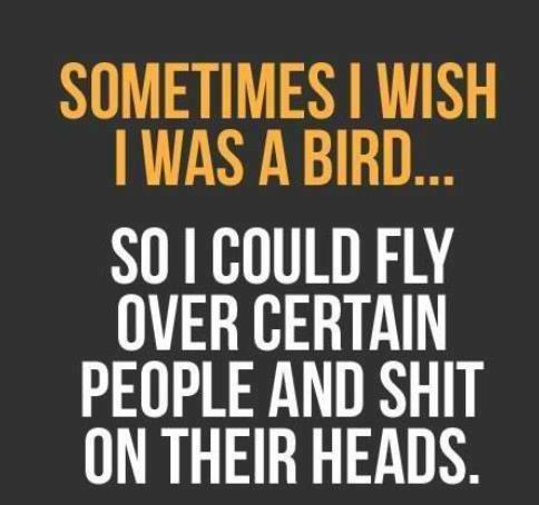 i wish i was a bird too