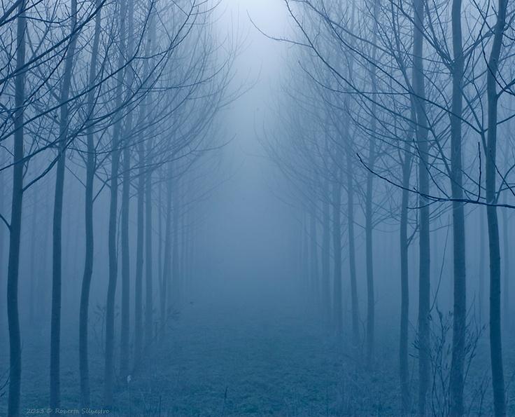 Perdersi nella Nebbia