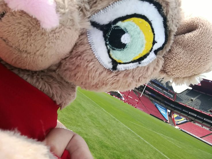 Trying my hand at this selfie-business! Am I seeing you on Saturday when the Emirates Lions take on the Waratahs on Emirates Airline Park? #LeyaTheLion #Lions4Life #Liontainment #LIOvWAR #BeThere #MyLionsMoment