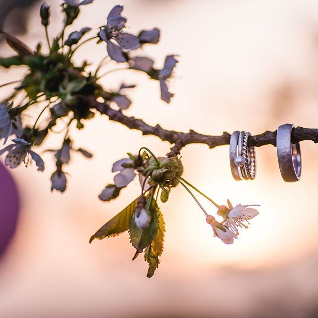 【jungundwild_design】さんのInstagramをピンしています。 《Pink and Black! Ring, Flowers and Sun! Best combination ever! Konzept und Umsetzung: @farbgold  Foto und Film: @jungundwild_design Model: @therealr  Hair and Makeup: @hairmakeup_annadeittert  Hairflowers: @daniela_m_weise  Rings: @skusaschmuckgeschichten  Cake: @kleinetortenstube  Flowers: @katharinaschummks  Guest presents: @seifenmanufaktur_vintage . . . . #wedding #weddinstyledshoot #weddings #weddingphotography #weddingdress…