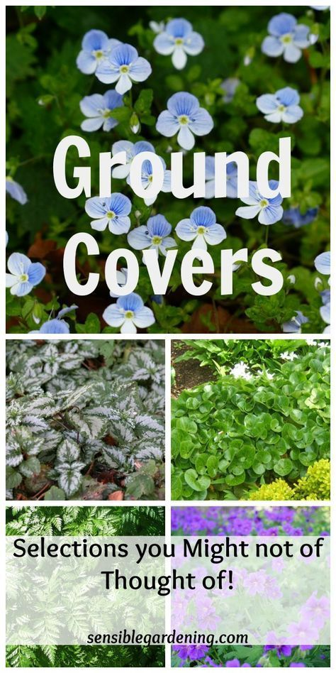 Nice Ground Covers with Sensible Gardening Plant varieties you might not of thought of to use