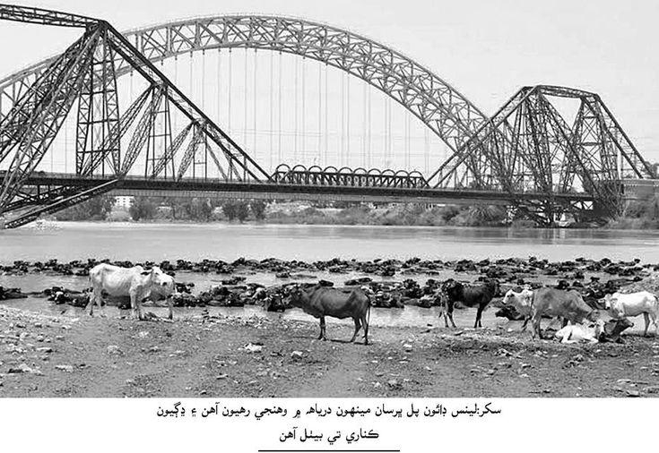 Sindh Express News Story