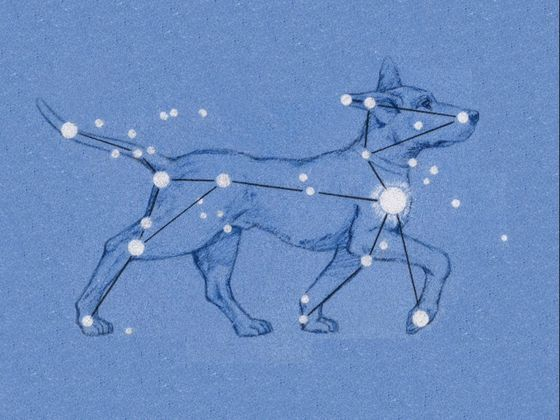 Which Constellation Are You?What group of stars is your spirit connected to? Pegasus? Draco? Click here to find out!