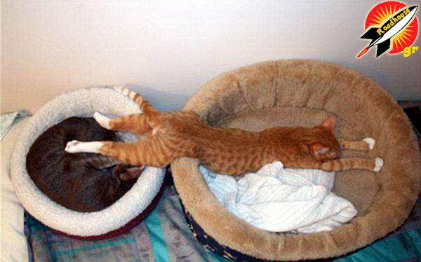 Όταν οι γάτες κοιμούνται μετατρέπουν τον ύπνο σε... τέχνη, και εμείς το απολαμβάνουμε με το παραπάνω: