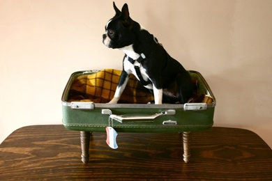 another suitcase dog bed. I miss my boston {buttons}, but man they are stinky dogs