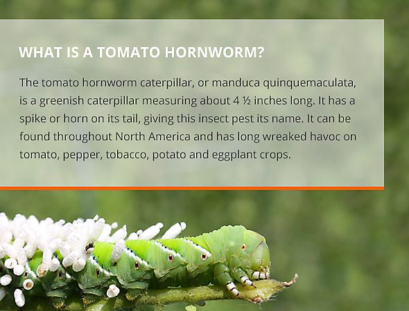 10 Best Garden Pest Control & Tips Images On Pinterest | Home And