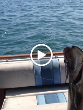 Smiles Included  Order the lures that continues to outperform  www.skippersta...