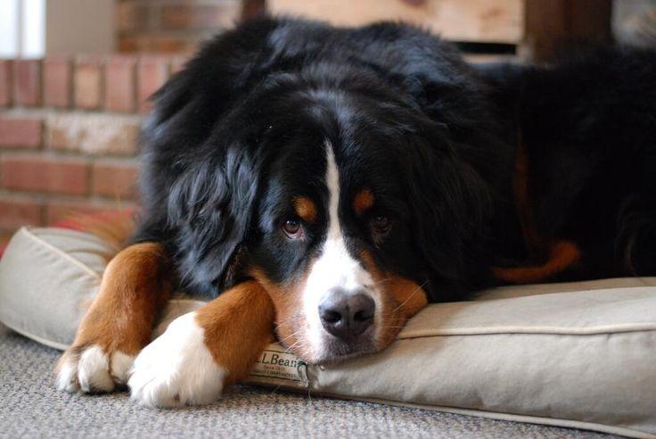 Dog Beds Best Friends