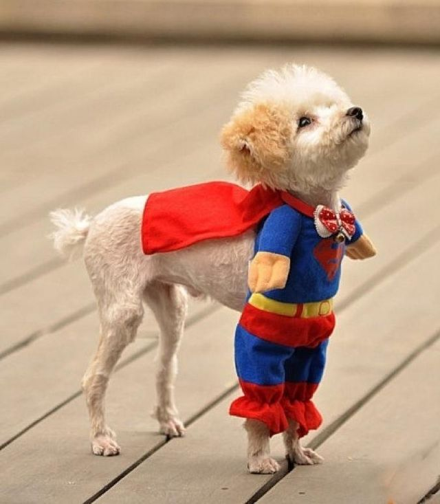 http://www.reddit.com/r/pics/comments/qdz70/best_puppy_costume/