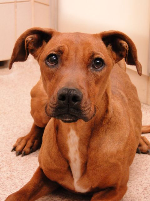 Dogs To Adopt In Arlington Tx