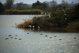 2 de Febrero Día Mundial de los Humedales !!  Entre nuestros paquetes también tenemos presente la naturaleza y el avistamiento de aves.